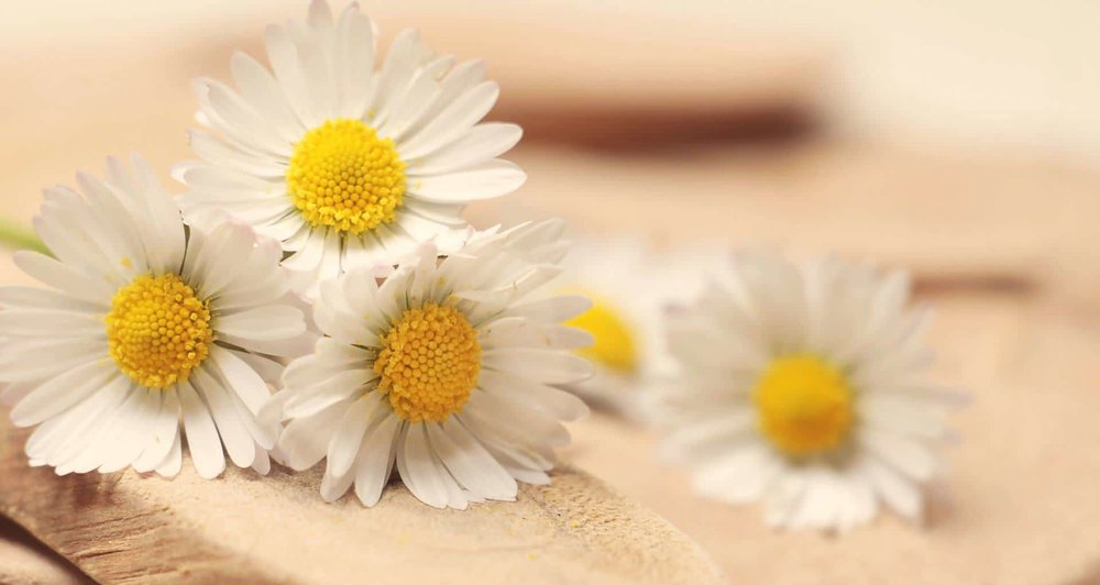 bunch of daisy flowers on table
