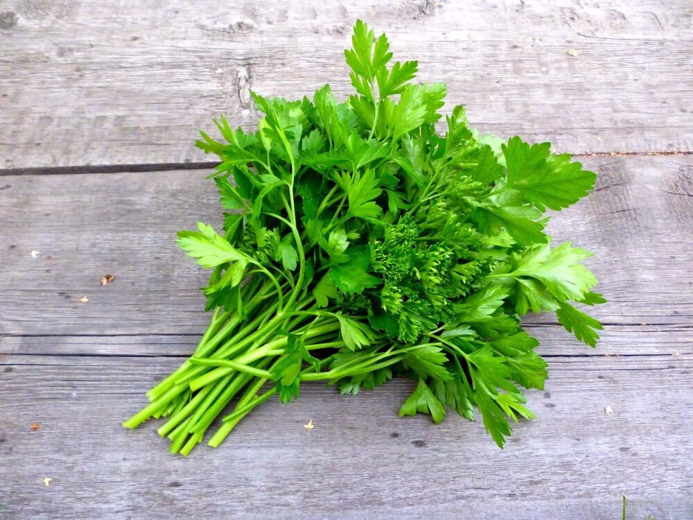 bundle of fresh parsley leaves and stems