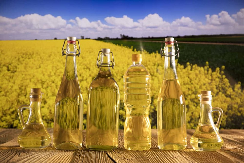 canola oil bottles with rapeseed plant farm