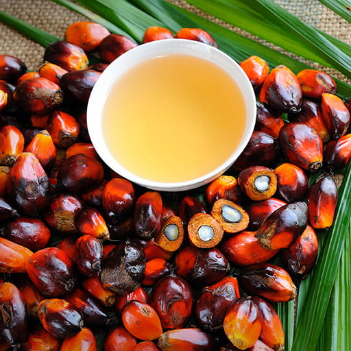 palm oil and palm fruits on tropical leaves