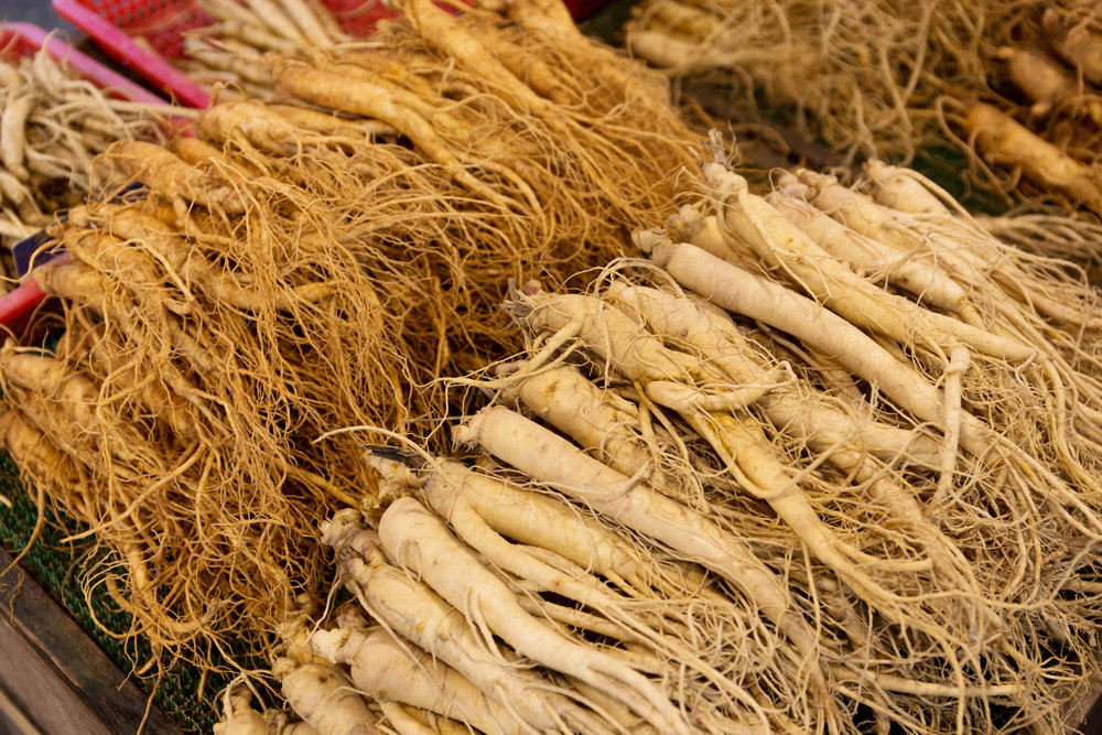 red ginseng panax ginseng roots