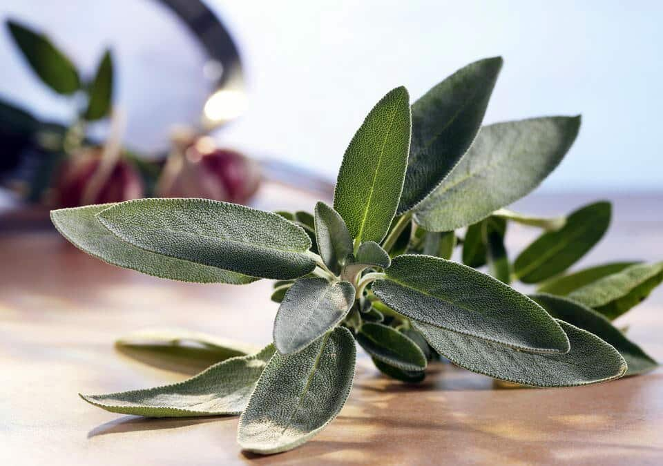 sage plant on wooden board