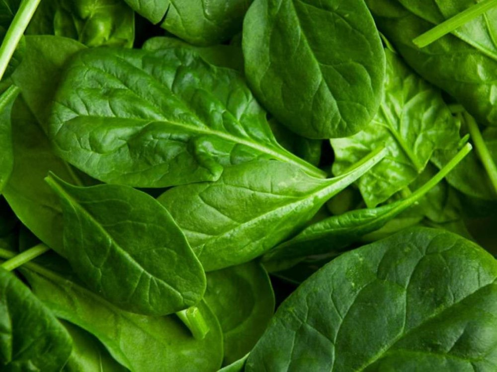 spinach bunch weight loss