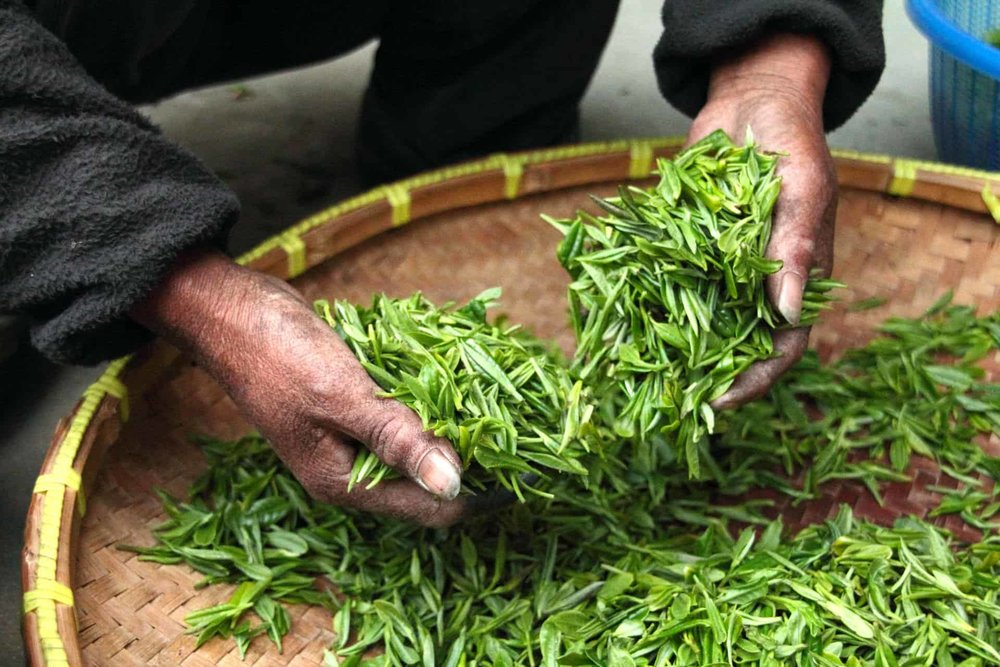 working with tea leaves
