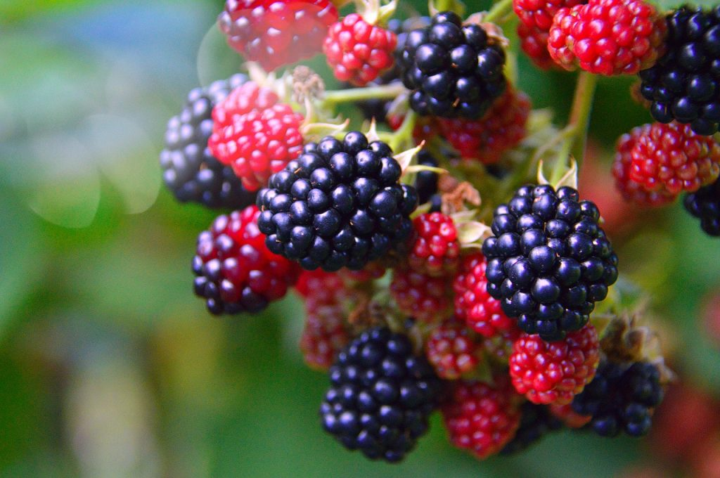 What are Blackberries?