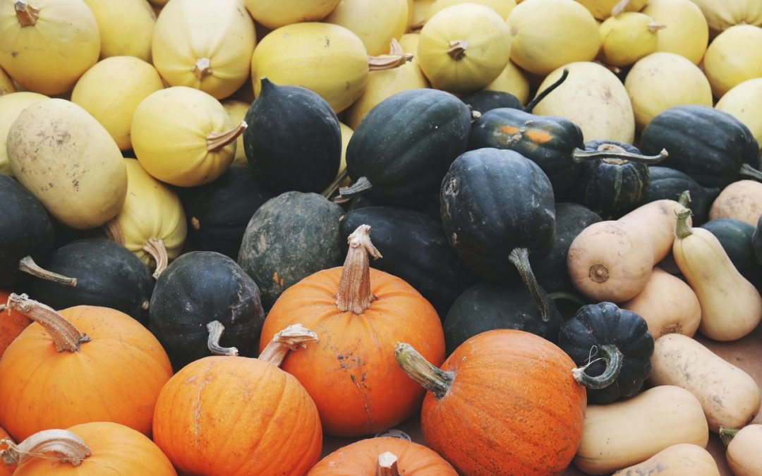 Squash - Health Benefits and Side Effects