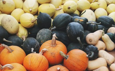 Squash – Health Benefits and Side Effects